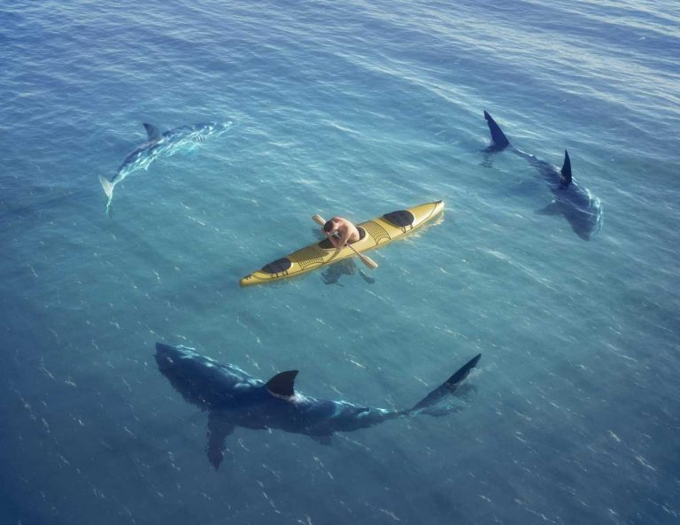 All Questions About Beautiful Sharks and Kayakers
